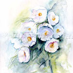 Islandmohn-(5) / Watercolour 30x40cm  © janinaB.