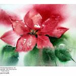 Weihnachtsstern II (13) / Aquarell 30,5x23cm auf Fabriano © janinaB.