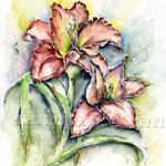 Taglilien (18) / Watercolour 30x40cm  © janinaB.