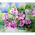 Hortensie I 2014 (18) / Watercolour 27x35cm