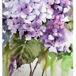 Hydrangea IV 2017 (O2) / Watercolour 20x29cm on Fabriano CP © janinaB. 2017