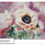 Anemones V 2017 (21) / Watercolour 30x40cm © janinaB. 2017