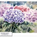 Hydrangea VI 2017 / Watercolour 30x40cm on Arches CP © janinaB. 2017