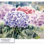 Hydrangea VI 2017  (10) / Watercolour 30x40cm on Arches CP © janinaB. 2017
