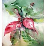 Weihnachtsstern (1) / Watercolour 23x30cm