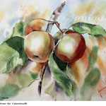Apples I 2018 / 30x40cm / (22) / Watercolour by ©janinaB.