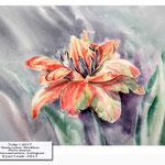Tulip I 2017 (20) / Watercolour 30x40cm Photo source: Botanicaetcetera  Instagram © janinaB. 2017