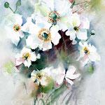 Herbstanemonen (8) / Watercolour 23x31cm