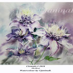 Clematis I 2018 (20) / 30x40cm Watercolour by ©janinaB.