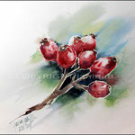 Hagebutten (O4) / Watercolour 18x24cm