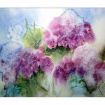 Hydrangea (17) / Watercolour 27x35cm