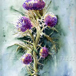 Distel (17) / Watercolour 24x32cm  © janinaB.