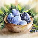Stillleben mit Beeren und Zwetschgen (7) / Watercolour 23x30cm
