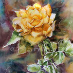 gelbe Rose (21) / Aquarell 30x40cm