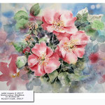 wild roses II 2017 / Watercolour 30x40cm on Arches CP © janinaB. 2017 /  nicht verfügbar