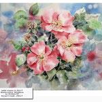 wild roses II 2017 (19) / Watercolour 30x40cm on Arches CP © janinaB. 2017 /  nicht verfügbar