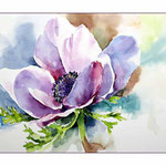 Anemone (15) / Watercolour 24x34cm
