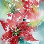 Weihnachtssterne (17) / Watercolour 23x31cm