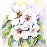 Mandelblüte-(6) / Watercolour 30x40cm