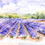 Lavendelmeer (T1) / Watercolour 34x48cm  ©janinaB.