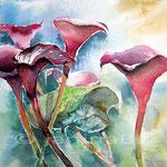 Drama Queens of the Garden (17) / Watercolour 23x31cm