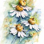 Kamille (18) / Watercolour 30x40cm  © janinaB.