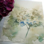 blaue Hortensie (9) / Watercolour 30x40cm
