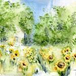 Sonnenblumen-in-Oxford-NC-(6) / Watercolour 24x34cm  ©janinaB.