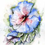 Hibiskus (19) / Watercolour 30x40cm  © janinaB.