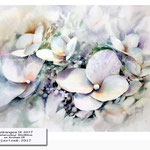 Hydrangea IX 2017_9 (10) / Watercolour 30x40cm on Arches CP © janinaB. 2017