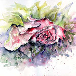 Stockrose (1) / Watercolour 30x40cm  © janinaB.