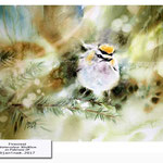 Firecrest (7) / Watercolour 30x40cm on Fabriano CP © janinaB. 2017