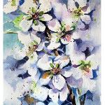 cherry blossom I 2017 (O2) / Watercolour 15x20cm on Fabriano CP © janinaB. 2017