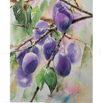 Plums I 2017 (20) / Watercolour 30x40cm © janinaB. 2017