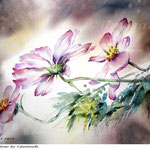 Cosmea I 2018 (20) / 30x40cm Watercolour by ©janinaB.