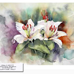 Lilies II 2017 / Watercolour 30x40cm on Arches CP © janinaB. 2017