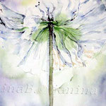 white poppy (18) / Watercolour 30x40cm