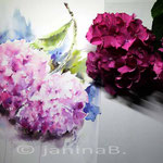Hortensien in Pink (T3) / Watercolour 30x45cm
