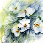 Flowers II (1) / Watercolour 30x40cm