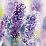 Lavendel (O3) / Aquarell 22x15cm