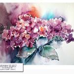 Hydrangea VII 2017 (10) / Watercolour 30x40cm on Arches CP © janinaB. 2017