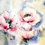 Pink Poppy (T2) / Watercolour 30x45cm