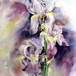 Iris (14) / Aquarell 30x40cm