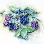 Brombeeren-(7) / Watercolour 30x40cm