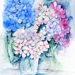 Hortensien (5) / Watercolour 30x40cm  © janinaB.