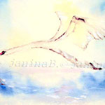 Swan I 2012 (9) / Watercolour 23x32cm
