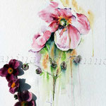 Herbst-Anemone-(8) / Watercolour 30x40cm