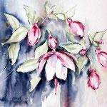Fuchsie (17) / Watercolour 30x40cm