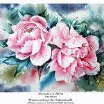 Peonies I 2018 (20) / 30x40cm Watercolour by ©janinaB.