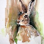 he hare my friend / Aquarell 23x31cm